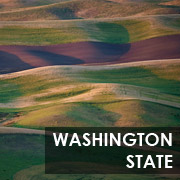 washington_state_button_180