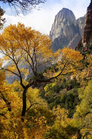 Zion | Fall Ramparts